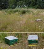 Honing van Moerenburg